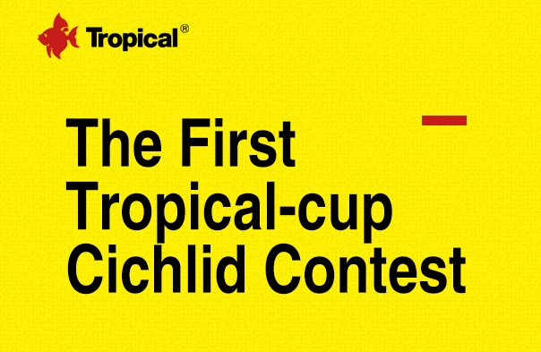 The First Tropical-cup African Cichlid Contest in China!