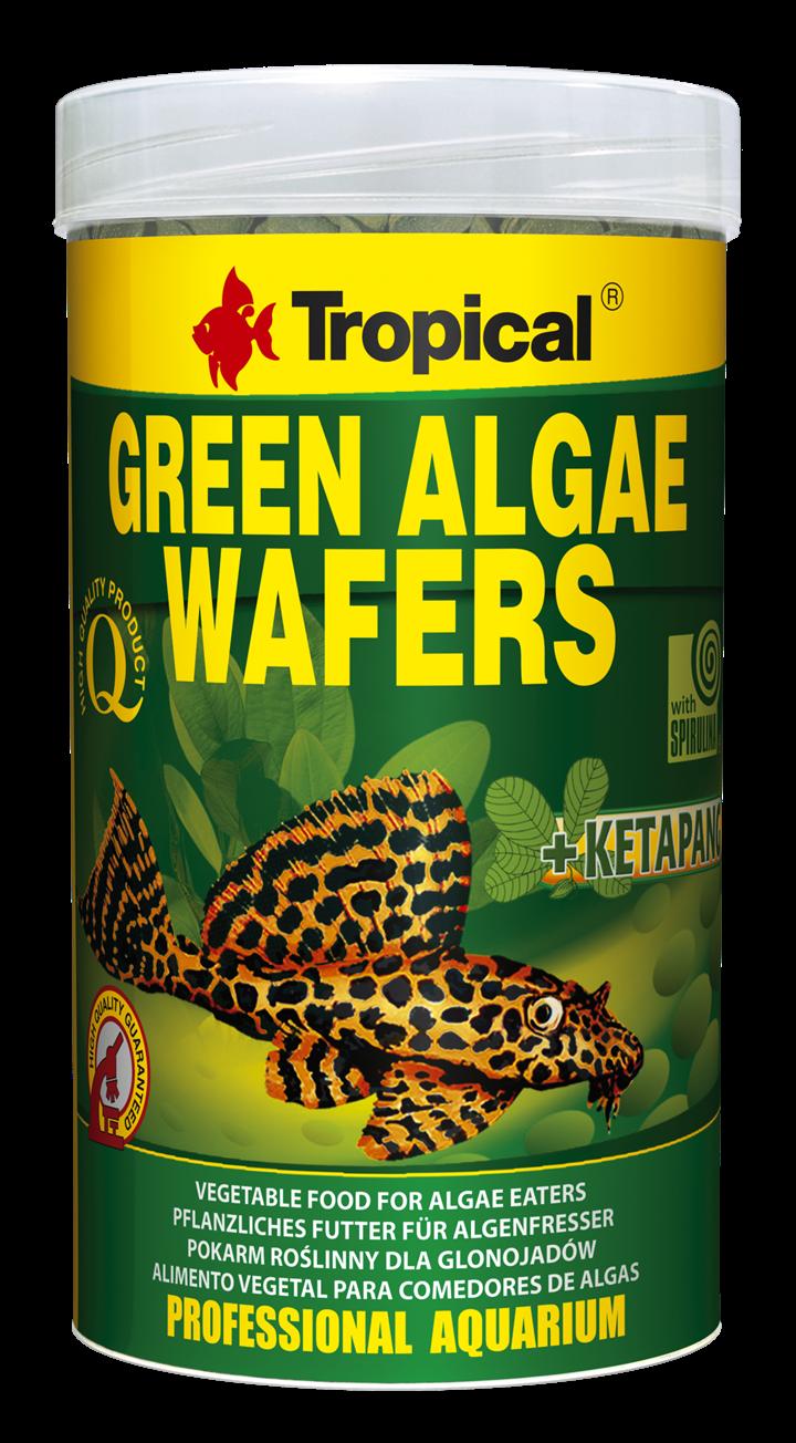 GREEN ALGAE WAFERS
