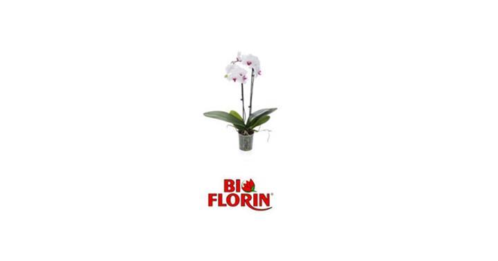 Gadżety - Biflorin - Linia produktów