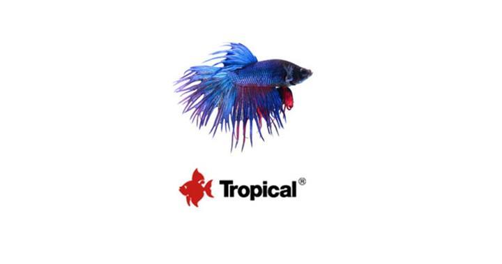Gadżety - Tropical - Linia produktów