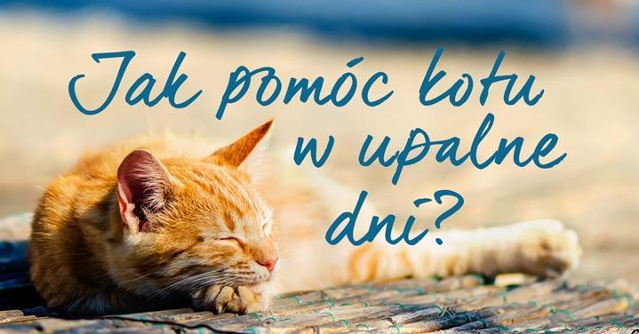 Dowiedz się jak pomóc kotu domowemu w gorące dni.