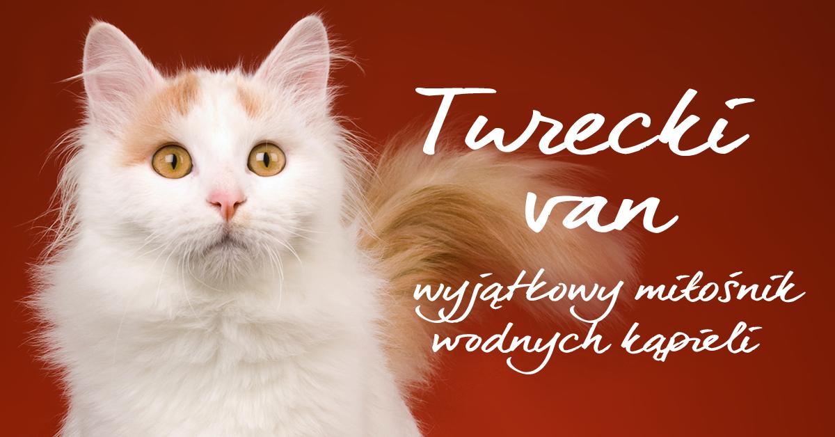 Niezwykła i fascynująca rasa kotów